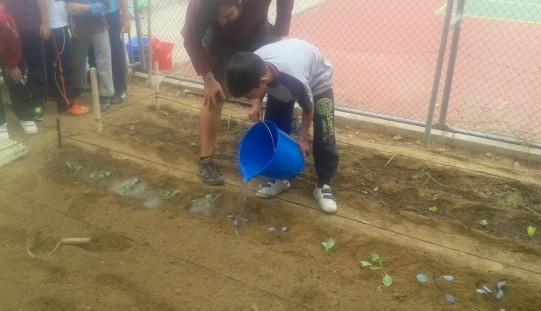 Alumnos de 4º de Primaria plantan más de 100 hortalizas en el huerto del colegio