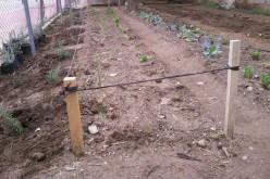 La compostera del colegio se amplía con guisantes, habas y plantas aromáticas