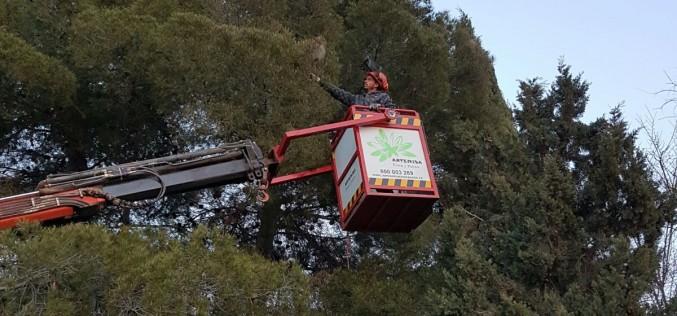 El Ayuntamiento comienza los trabajos de eliminación contra el paso de la procesionaria